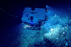 Image courtesy of NOAA Okeanos Explorer Program, Our Deepwater Backyard: Exploring Atlantic Canyons and Seamounts