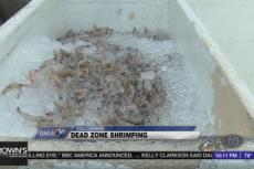 Shrimpers affected by dead zones